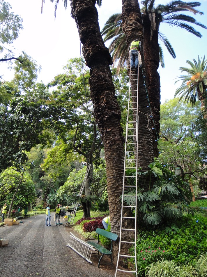 Funchal, Madeira - Putting up Chritmas lights